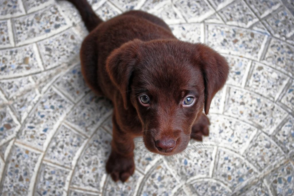 puppy sitting